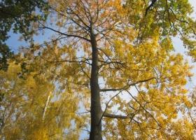 Herbstimpressionen-IMG_0061-1