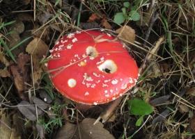 Herbstimpressionen-IMG_0067-1