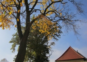 Herbstimpressionen-IMG_0075-1