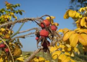 Herbstimpressionen-IMG_0080-1