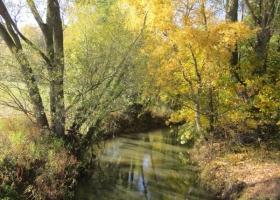 Herbstimpressionen-IMG_0084-1