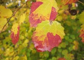 Herbstimpressionen-IMG_0068-1