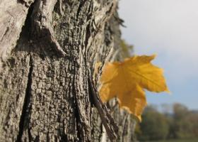 Herbstimpressionen-IMG_0077-1