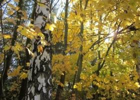 Herbstimpressionen-IMG_0081-1