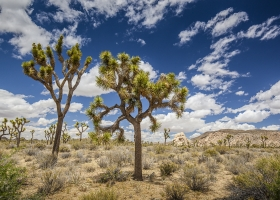 USA, Joshua-Tree-Nationalpark