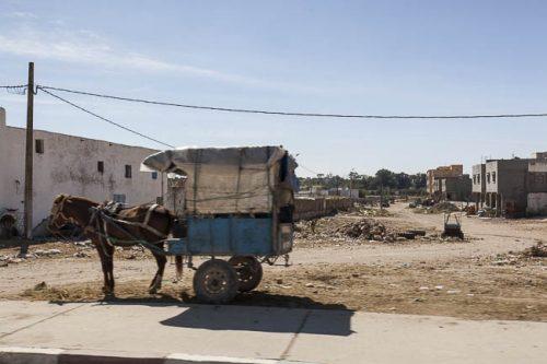 Esel mit Planwagen
