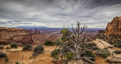 Bild des Tages – Canyonlands-Nationalpark Utah USA
