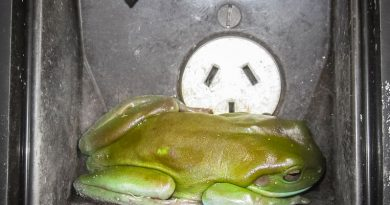 Frosch im Stromkasten