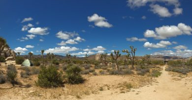 Panorama Foto Joshua-Tree